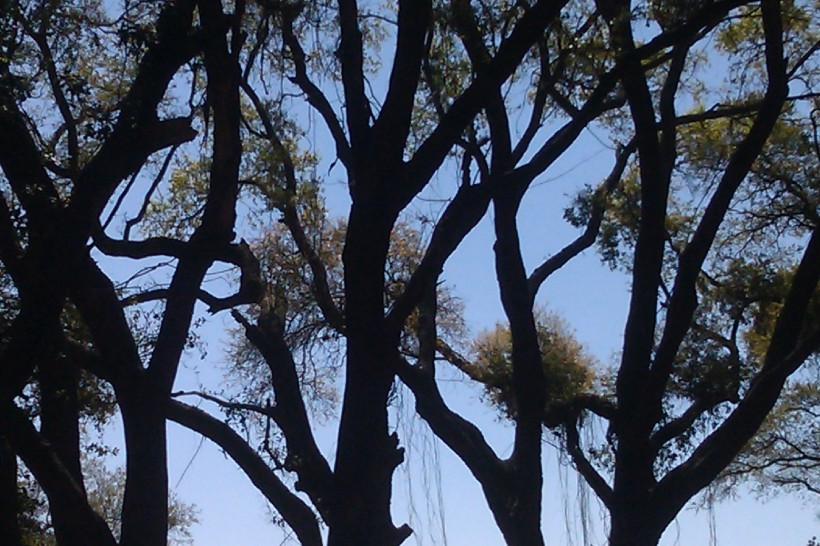 trees, moss, blue