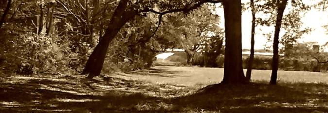 cropped-mckenzie-beach-sepia1.jpg