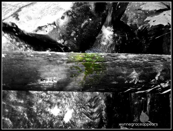log over creek w moss