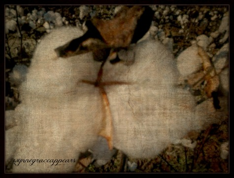 close up cotton