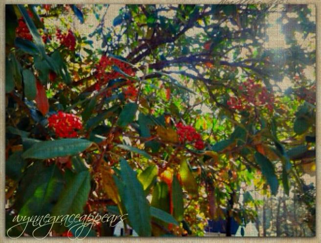 berries in sunlight