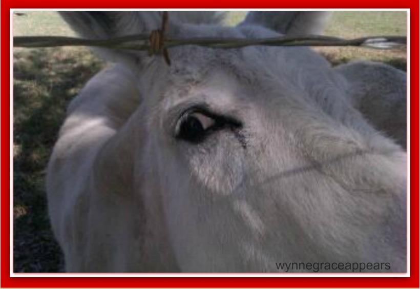 donkey-3 I got my eye on you
