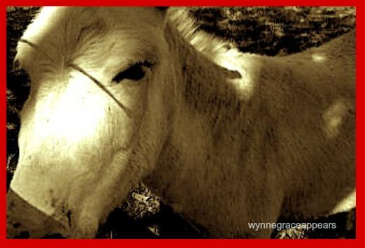 ive got my eye on you dirty donkey
