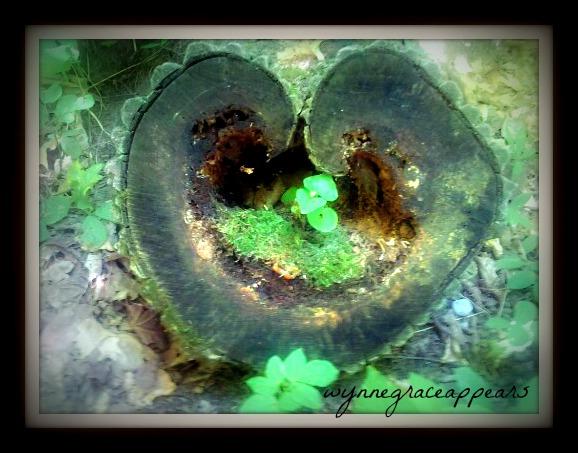 love root
