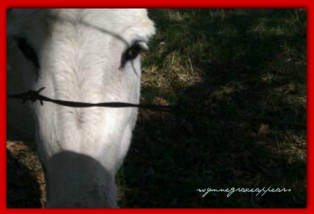 shadows eyes and donkey