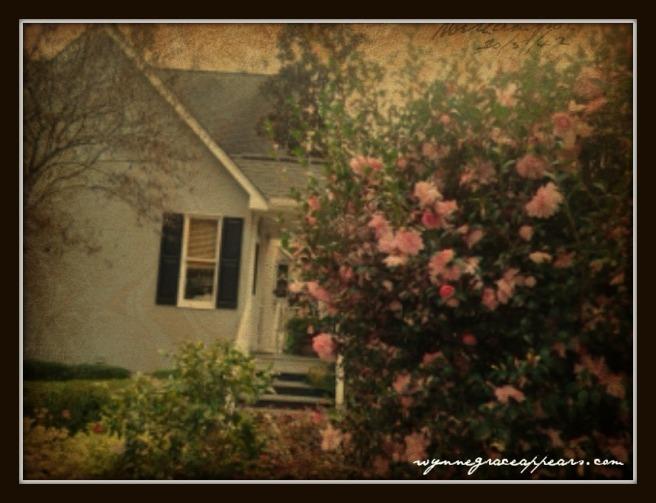 house camelias