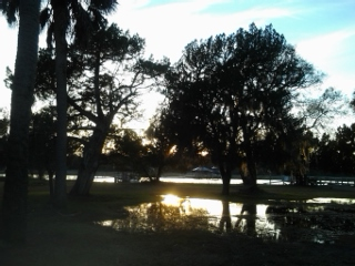 mcvl sunset and tree:puddles