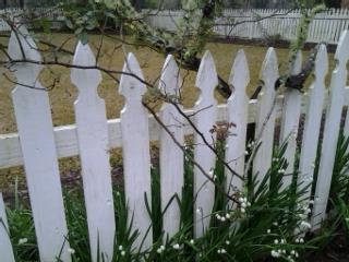 mcvl third lilly and vine