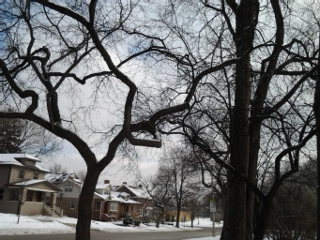 trees in oak park