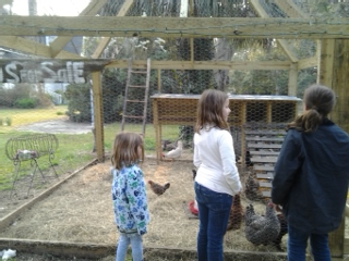 lilly and her chickens
