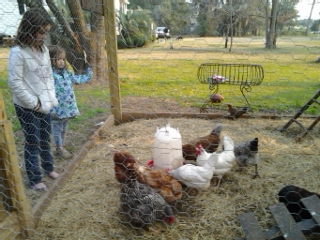 The chickens and the kids