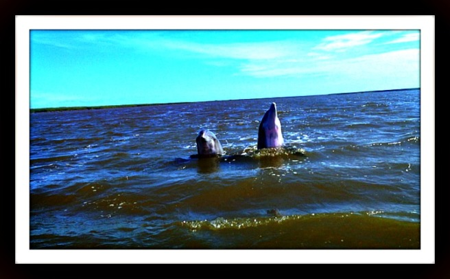 dolphin duo show offs