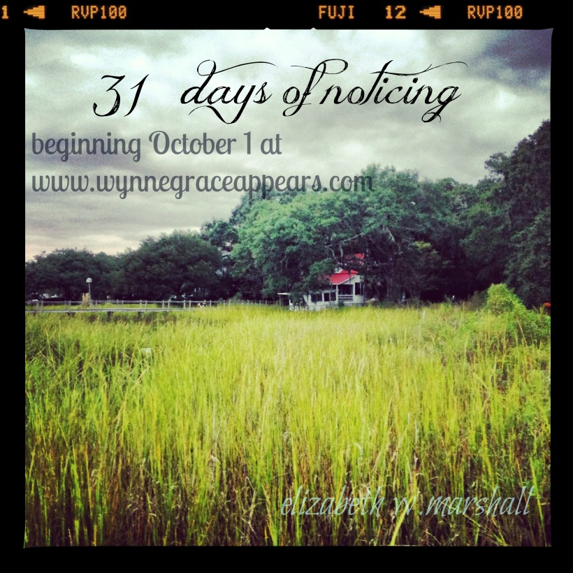 MCVL marsh grass - 31 Days of Noticing